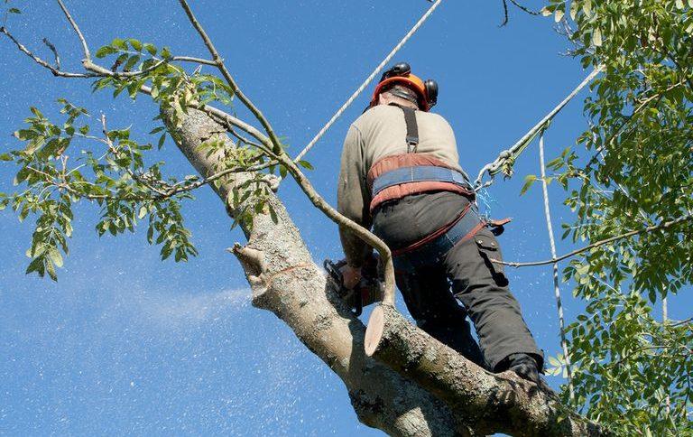 Élaguer un arbre soi même